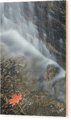 Closeup Maple Leaf And Decew Falls, St Wood Print by Darwin Wiggett