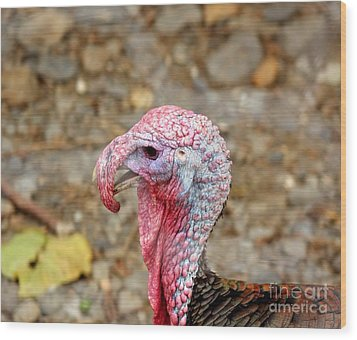 Wood Print featuring the photograph Closeup Of A Male Turkey by Yali Shi