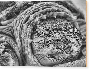 Wood Print featuring the photograph Closeup Of A Snapping Turtle by JC Findley