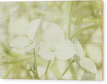 Closeup Of Hydrangea Flowers With Vintage Background Wood Print by Sandra Cunningham