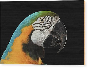Closeup Portrait Of A Blue And Yellow Macaw Parrot Face Isolated On Black Background Wood Print by Sergey Taran