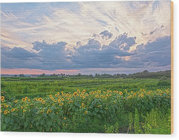 Clouds And Sunflowers Wood Print
