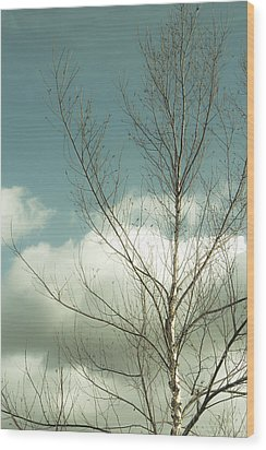Cloudy Blue Sky Through Tree Top No 2 Wood Print by Ben and Raisa Gertsberg