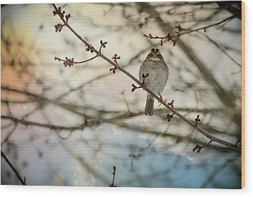 Wood Print featuring the photograph Cloudy Finch by Trish Tritz