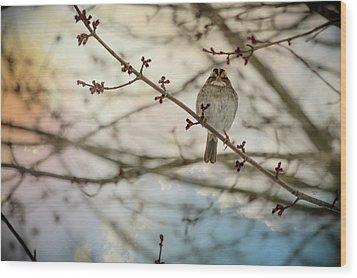 Cloudy Finch Wood Print by Trish Tritz