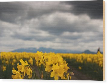 Wood Print featuring the photograph Cloudy With A Chance Of Daffodils by Erin Kohlenberg