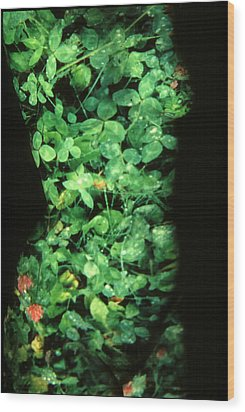 Clover Wood Print by Arla Patch