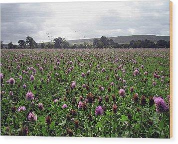 Clover Field Wiltshire England Wood Print by Kurt Van Wagner