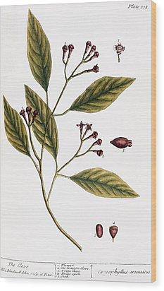 Cloves, 1735 Wood Print by Granger