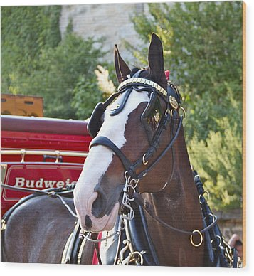 Clydesdale At Esp Wood Print by Alice Gipson