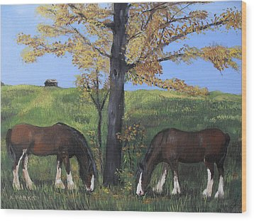 Clydesdale Feeding Wood Print by Aleta Parks