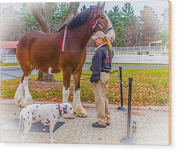 Clydesdale With Handler And His Companion Wood Print