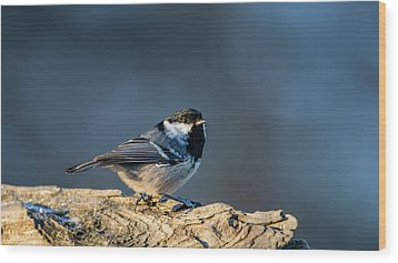 Wood Print featuring the photograph Coal Tit's Colors by Torbjorn Swenelius
