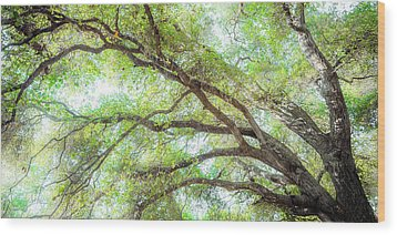 Coast Live Oak Branches Wood Print