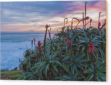Coastal Aloes Wood Print