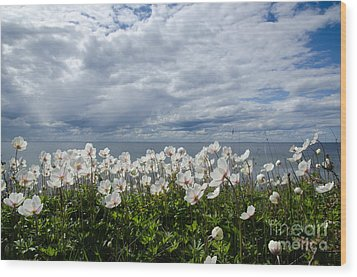 Coastal Backlit Anemones Wood Print