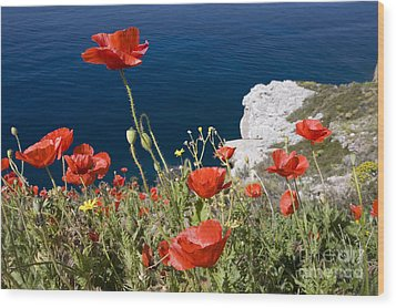 Coastal Poppies Wood Print by Richard Garvey-Williams