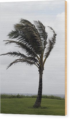 Coastal Winds Wood Print