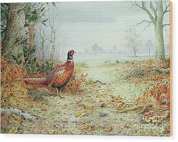 Cock Pheasant  Wood Print by Carl Donner