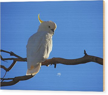 Cockatoo Wood Print by Linda Hollis