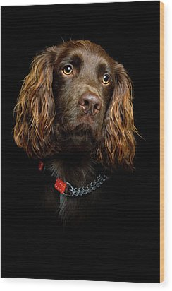 Cocker Spaniel Puppy Wood Print by Andrew Davies