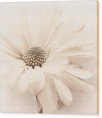 Wood Print featuring the photograph Coco Ice by Darlene Kwiatkowski