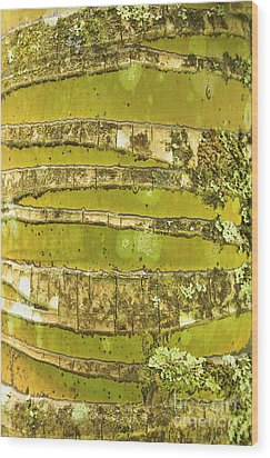 Coconut Palm Bark 1 Wood Print by Brandon Tabiolo - Printscapes