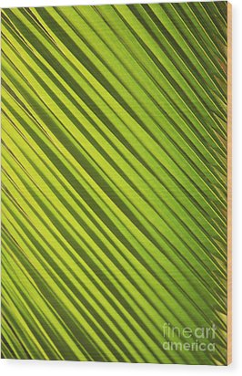 Coconut Palm Wood Print by Brandon Tabiolo - Printscapes