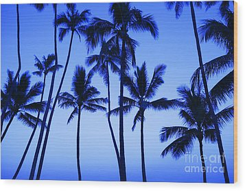Coconut Palms At Dawn Wood Print by Dana Edmunds - Printscapes