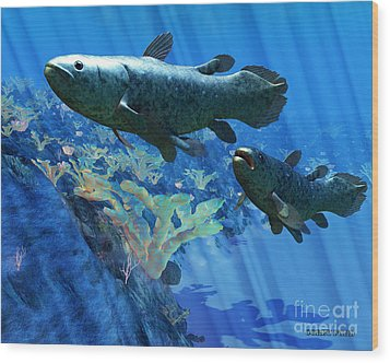 Coelacanth Fish Wood Print by Corey Ford