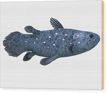 Coelacanth Fish On White Wood Print by Corey Ford
