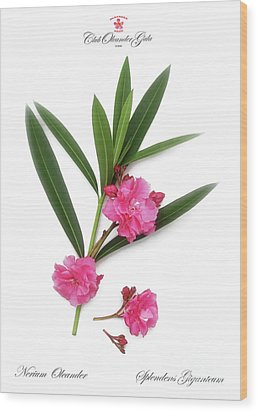 Wood Print featuring the photograph Cog  Nerium Oleander Splendens Giganteum by Wilhelm Hufnagl