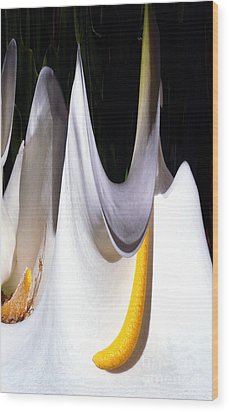 Cold Calla Poles Wood Print by Norman Andrus