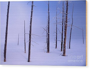 Wood Print featuring the photograph Cold Morning by Edward R Wisell