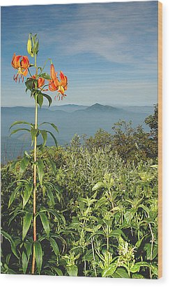 Cold Mtn. And Turk's Cap Lily Wood Print by Alan Lenk