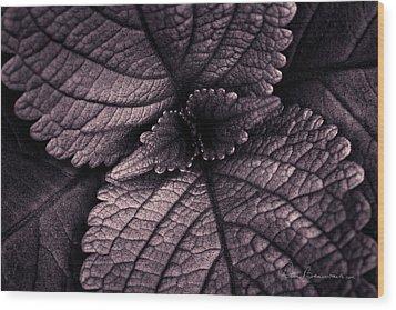 Coleus 6001 Wood Print by Dan Beauvais