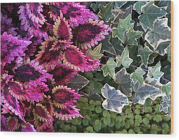 Wood Print featuring the mixed media Coleus And Ivy- Photo By Linda Woods by Linda Woods