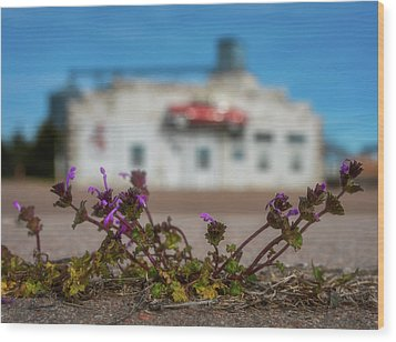 Wood Print featuring the photograph Collyer Sidewalk Blooms by Darren White