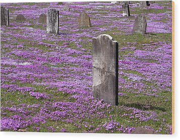 Colonial Tombstones Amidst Graveyard Phlox Wood Print by John Stephens