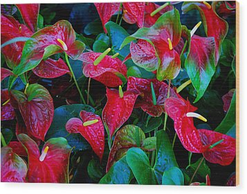 Wood Print featuring the photograph Color Blast by Nancy Bradley
