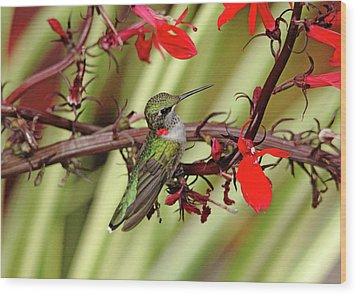 Color Coordinated Hummer Wood Print by Debbie Oppermann