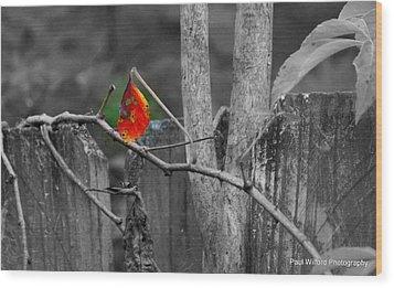 Color Of Fall Wood Print