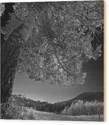 Colorado Aspen Black And White Wood Print by Dave Dilli