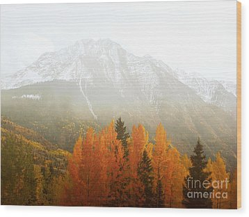 Colorado Aspen Trees Mountain Dreamy Landscape Wood Print by Andrea Hazel Ihlefeld