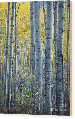 Colorado Aspens Wood Print by Inge Johnsson