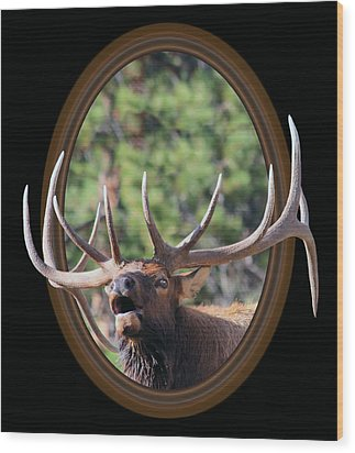 Wood Print featuring the photograph Colorado Bull Elk by Shane Bechler