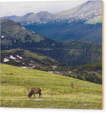 Colorado Elk Wood Print by Marilyn Hunt