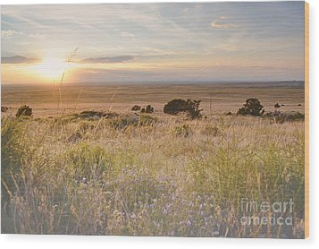 Colorado Field Sunset Landscape Wood Print by Andrea Hazel Ihlefeld