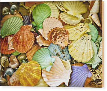 Colored Shells Wood Print by Marilyn Hunt