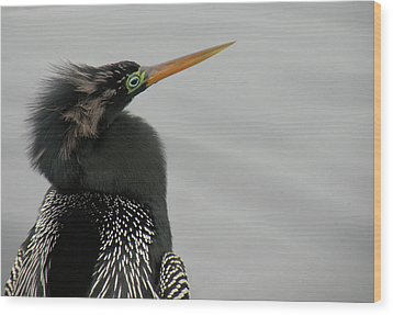 Colorful Anhinga Wood Print by Rosalie Scanlon